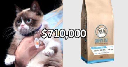 Grumpy cat Vs. Grumpy cat Coffee