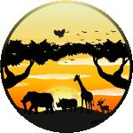 Safari company name ideas